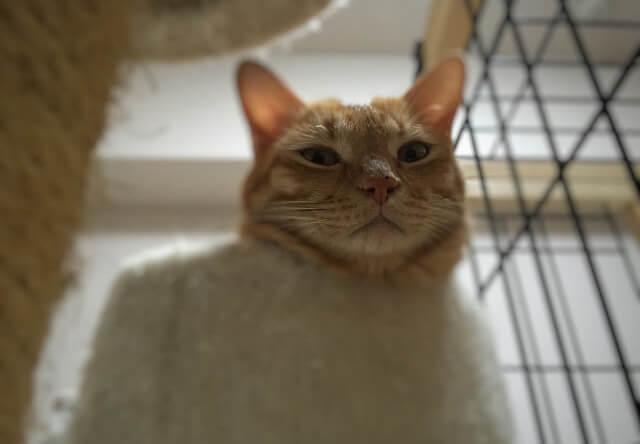 人を見下す猫 - 猫の写真素材