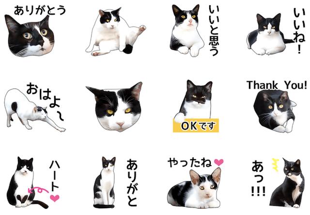 LINEスタンプ、「いろんな黒白猫♪」