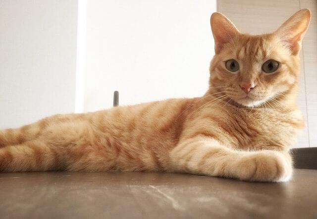 真剣な表情のネコ - 猫の写真素材