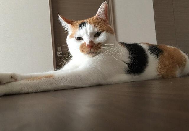 不審者を見るような目つき - 猫の写真素材