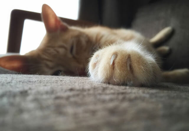 爪のアップ - 猫の写真素材