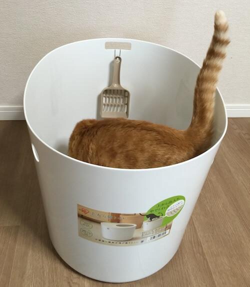 「上から猫トイレ」に入った茶トラ
