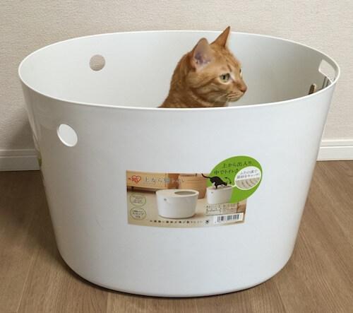 「上から猫トイレ」が気に入った茶トラ
