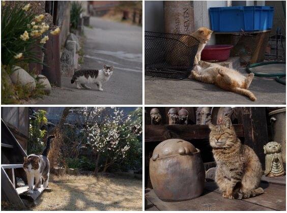 写真展 「やきものの里のネコ」展示写真イメージ1