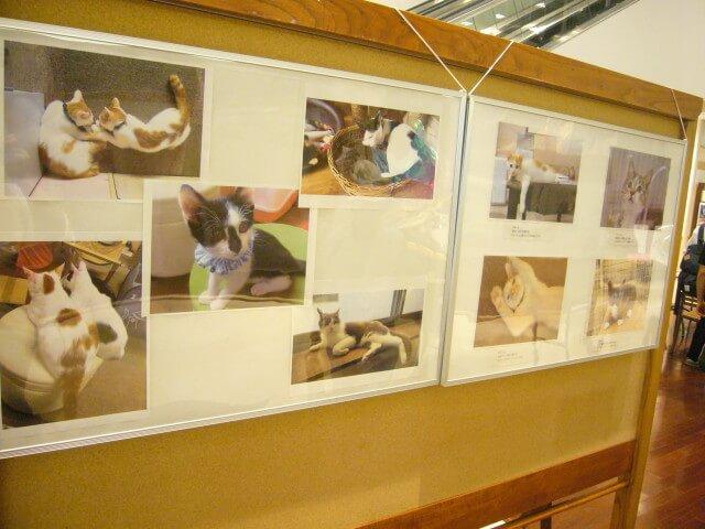もりねこ写真展の猫写真1