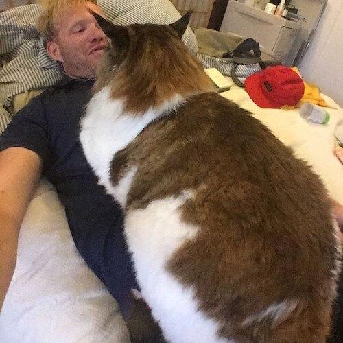 飼い主に覆い被さる巨大ネコのサムソン君