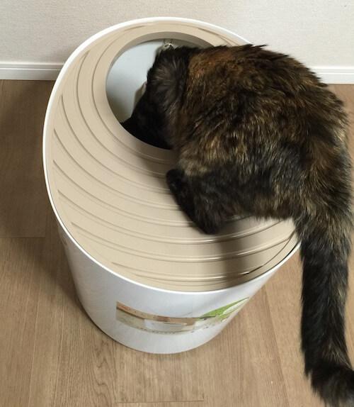「上から猫トイレ」に乗ったサビ猫