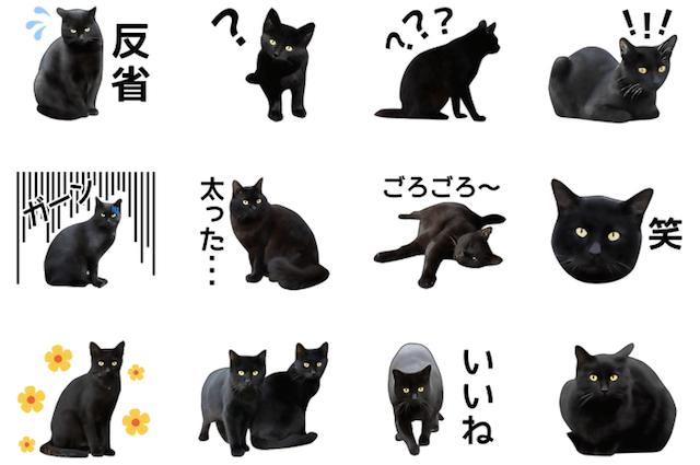 いろんな黒猫 スタンプイメージ2