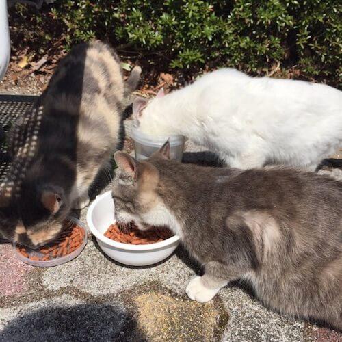 福島大学でエサをもらう猫