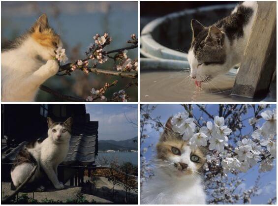 写真展 「やきものの里のネコ」展示写真イメージ3