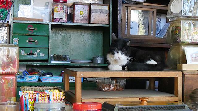 駄菓子屋「上川口屋」の看板猫、石松くん