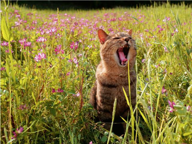 鹿児島県薩摩川内市の猫