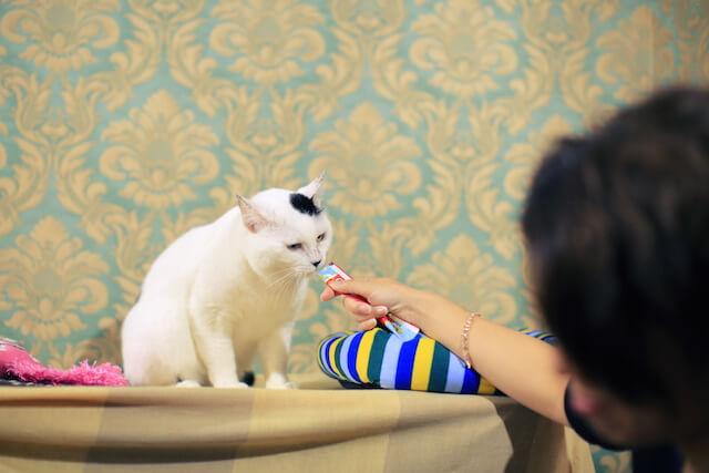 臭いをかぐ猫エイズの猫