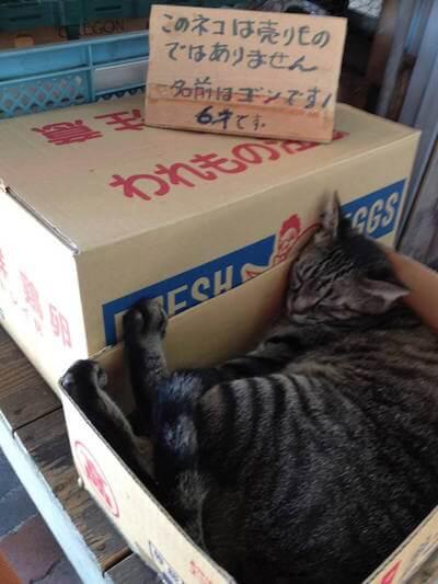 熱海の八百屋さんの猫
