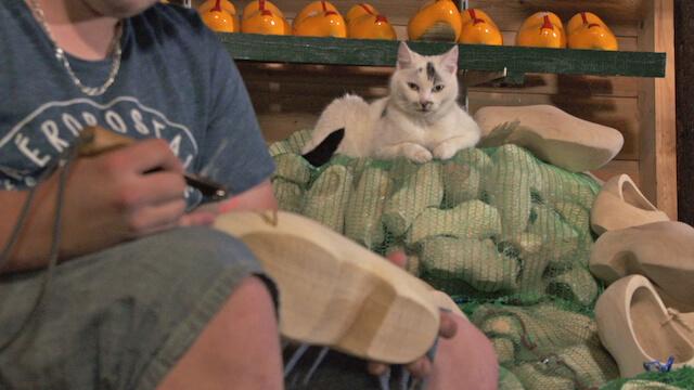 木靴職人の作業小屋にいる猫