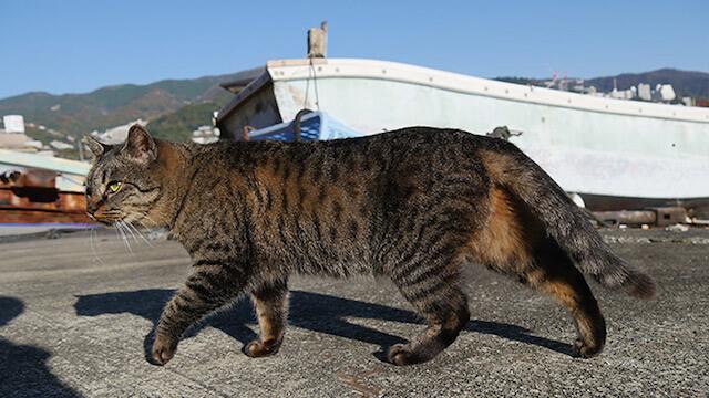 真鶴半島の漁港で暮らす猫