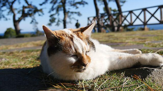 真鶴半島の景勝地「三ツ石」を眺める猫