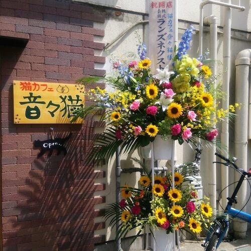 仙台市の小田原に、猫カフェ「音々猫(ねねねこ)」がオープン