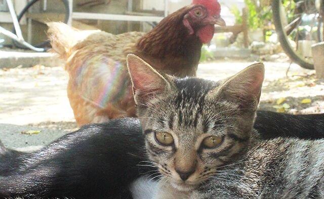 旅猫ロマン 八重山諸島の猫