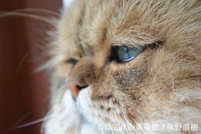 牧野直樹:しょんぼり顔のもふもふ猫「ふーちゃん」のモノクロ作品