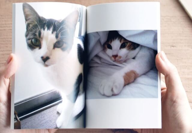 1コイン&スマホで愛猫のフォトブックが作れる「TOLOT」