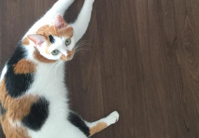 首が曲がり過ぎな猫 - 猫の写真素材