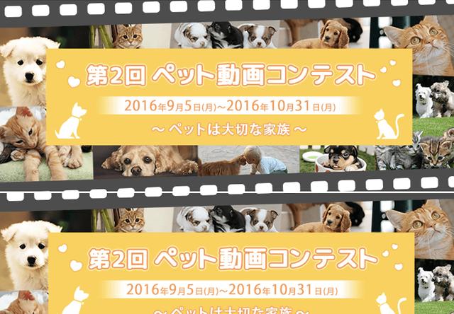 猫の動画もOK!第2回ペット動画コンテスト、1位は賞金10万円
