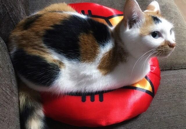 お気に入りのクッション – 猫の写真素材