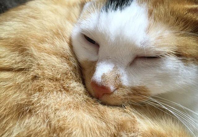 猫のお腹に顔を埋める猫 - 猫の写真素材