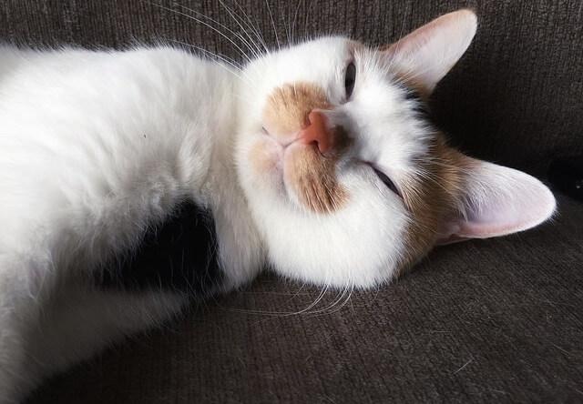薄目でチラ見 – 猫の写真素材