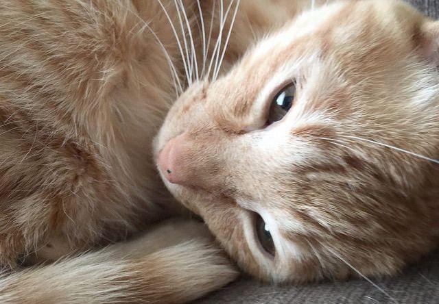 嫌そうな顔 - 猫の写真素材