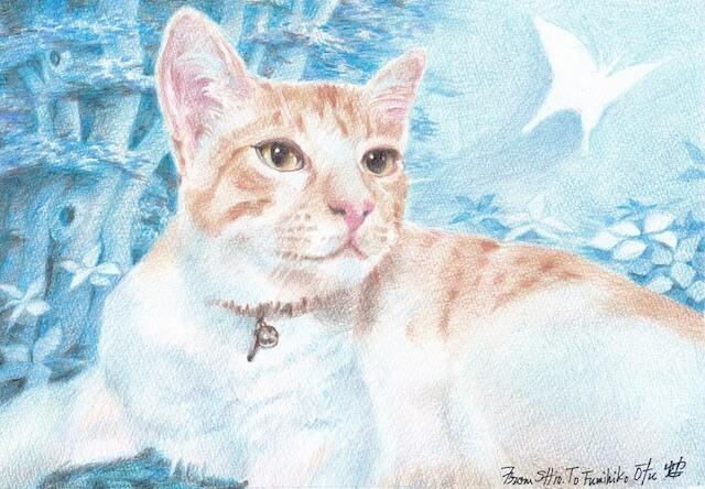 イラストレーターの塩川由美子さんが描いた猫作品