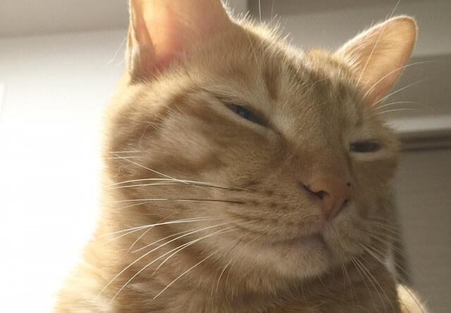 うっとり香箱座り - 猫の写真素材