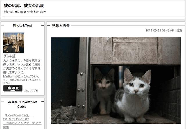 猫写真を公開している河井蓬さんのブログ