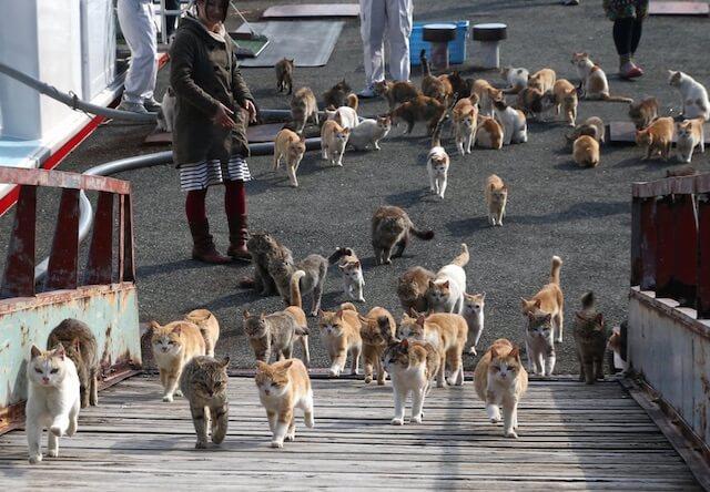 愛媛県の猫島「青島」の猫たち