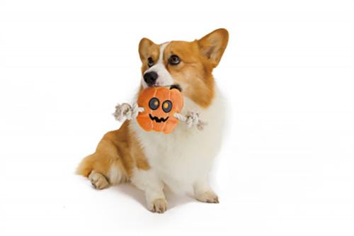 犬のおもちゃ 「Simply Fido」のハロウィン限定おもちゃ・パンプキン