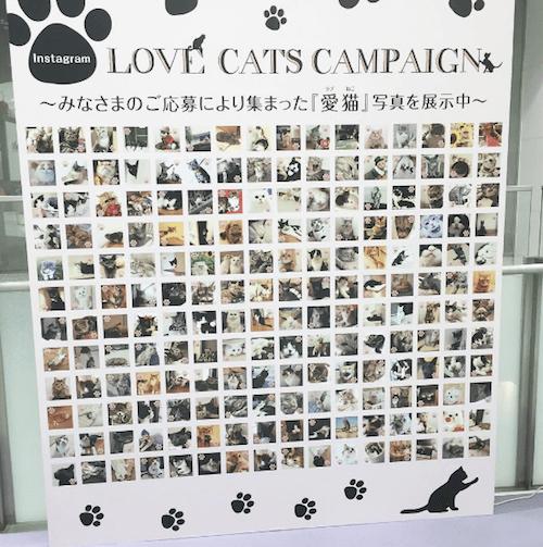 instagramの「#lovecats静パル」キャンペーン