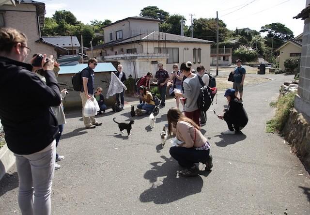 田代島で猫を撮影する外国人観光客