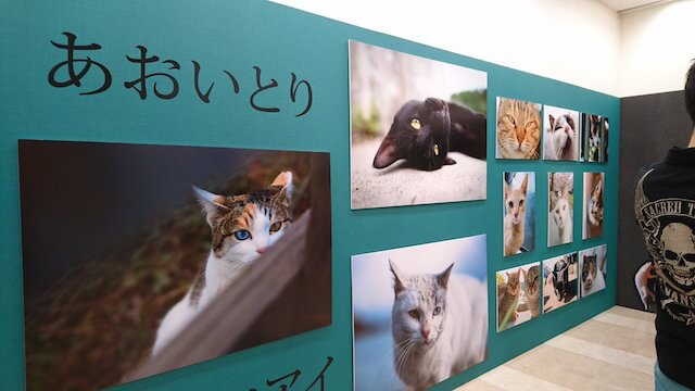 ねこ休み美術館 in 東京の展示風景1