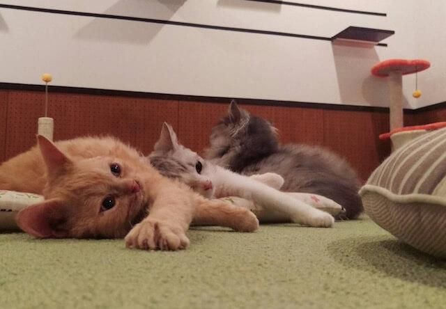 音々猫(ねねねこ)の触れ合いスペース