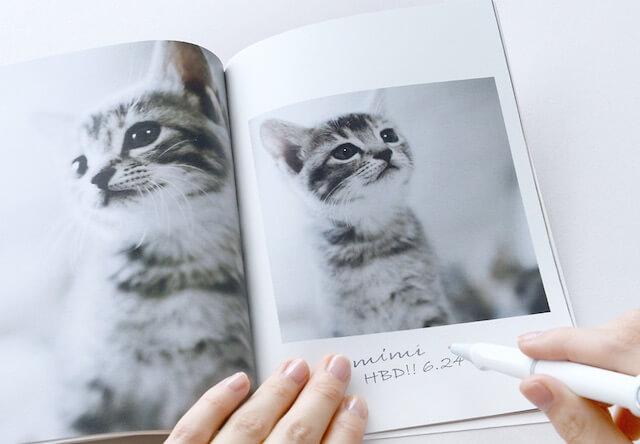 猫の成長記録に使えるフォトブック