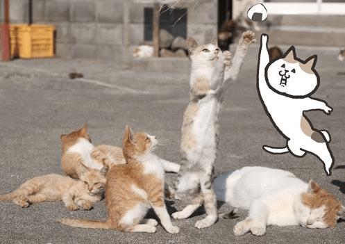にゃんとな猫島ふたり展 写真&イラスト作品イメージ1