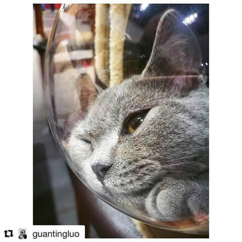 アニマリュックの窓にもたれかかる猫