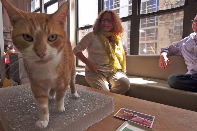 ニューヨークのビルで暮らしている茶白猫