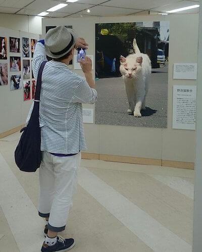 ねこ休み美術館 in 東京の展示風景3