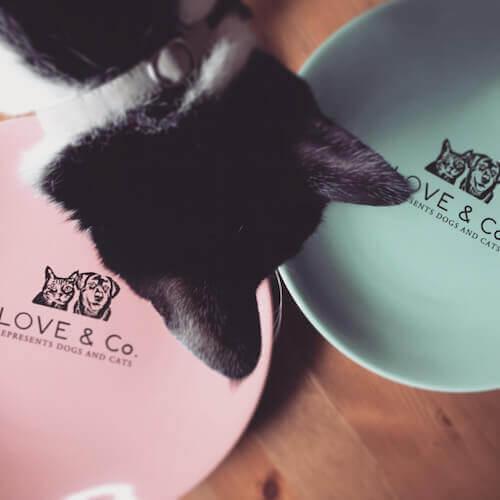 LOVE&Co.のプレートをチェックする猫