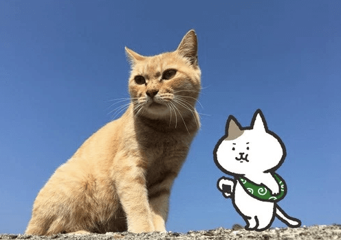 にゃんとな猫島ふたり展 写真&イラスト作品イメージ2
