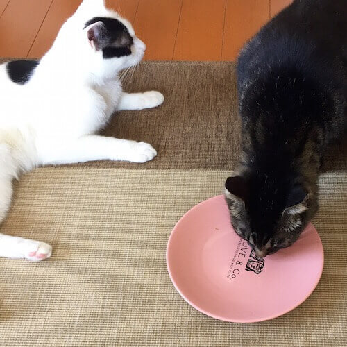 LOVE&Co.のプレートでご飯を食べる猫