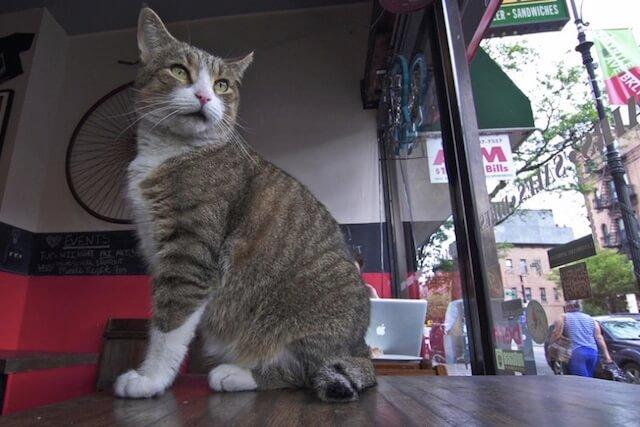 ニューヨークのお店にいる猫