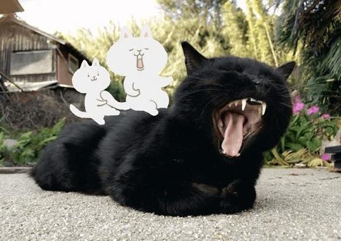にゃんとな猫島ふたり展 写真&イラスト作品イメージ3